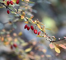 Natures Berries by Sharon Madison Bastianelli