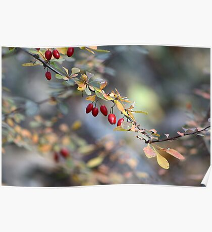 Natures Berries Poster