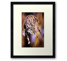 Sea Oats in Brooklyn Framed Print