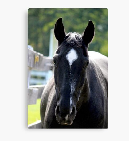 Black Beauty ~ A Star is Born Canvas Print