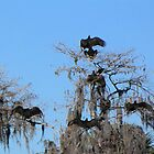 Turkey Vultures by Rosalie Scanlon