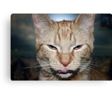 Cat Life Canvas Print