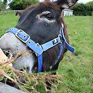 Feeding The Donkey by Vicki Spindler (VHS Photography)