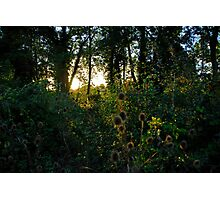 English Woodland Photographic Print