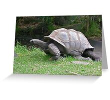 Slow and Steady wins the Race Greeting Card
