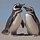 Penguin Pals by Krys Bailey