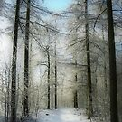 A Path in the Snow by ienemien