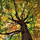 Fall Majesty by martinilogic
