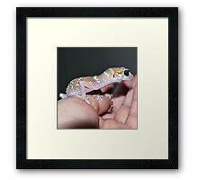 Me Lady - Hypo Thick-Tailed Gecko Framed Print