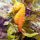 Yellow Seahorse by Matt-Dowse