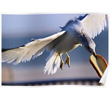Sea Gull At Lunch Poster