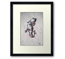 SANDBATH - Nephrurus Wheeleri Framed Print