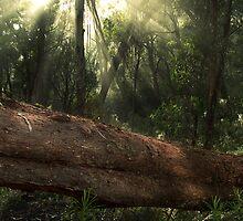 Fallen Log by Bruce Langdon