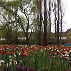 Tulips at Floriade by 3Cavaliers