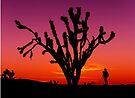 Sunset Over Mojave National Preserve by Alex Preiss