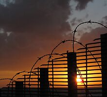 barbed wire sunset by david gilliver