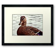 Mrs Mallard Framed Print