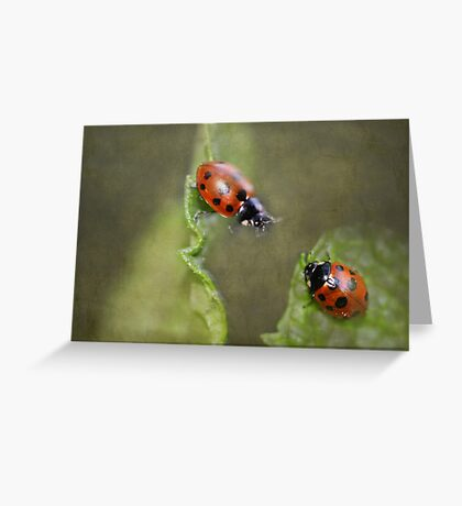"""""""I'm Coming ....I'm Coming...!"""" Greeting Card"""
