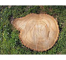 Fresh cut tree stump Photographic Print