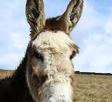 head donkey by morrbyte