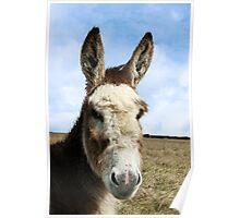head donkey Poster