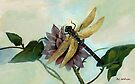 Dahlia with Dragonfly Resting by RC deWinter