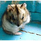 Mouse by fenist