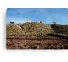 highest pasture Canvas Print