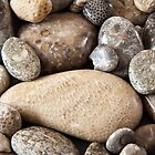 Fossil stones from the shore of Lake Michigan by Robert Kelch, M.D.
