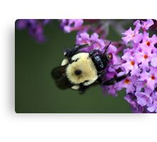 Buzzy Busy Bumble Bee Macro Canvas Print