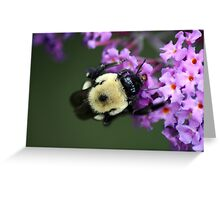 Buzzy Busy Bumble Bee Macro Greeting Card