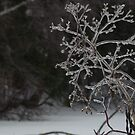 Frozen bush by Sinclere