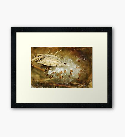Waiting for the Wind... Framed Print