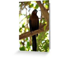 lady grackle  Greeting Card