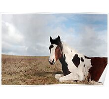 horse rests Poster