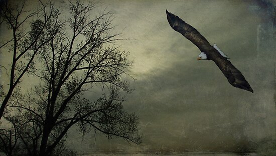 An Eagle Soars by swaby