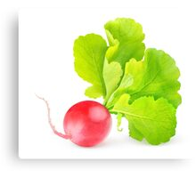 Red radish with big leaves Canvas Print