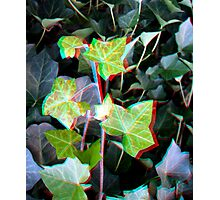 Ivy 3D Photographic Print