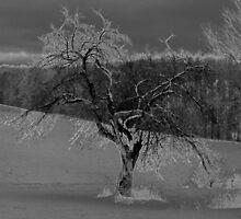 A Lone Tree by vigor