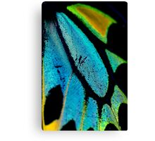 Cairns Birdwing Detail II Canvas Print
