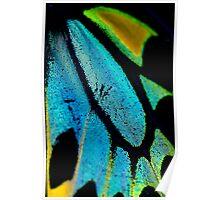 Cairns Birdwing Detail II Poster