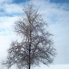 Frosty Tree by kodakcameragirl