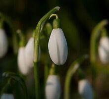 Is Spring around the Corner by mikebov