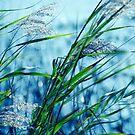 Blue Afternoon by Susanne Van Hulst