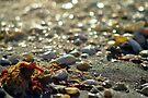 On the Beach by Kim McClain Gregal