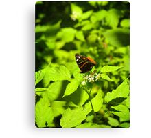 Red Admiral In Ohio Canvas Print