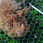 rabbit in a cage by Kent Tisher