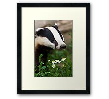 Badger Portrait Framed Print