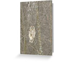 Winter Barred Owl Greeting Card