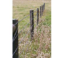 Australian Farm - Barbed Wire Photographic Print
